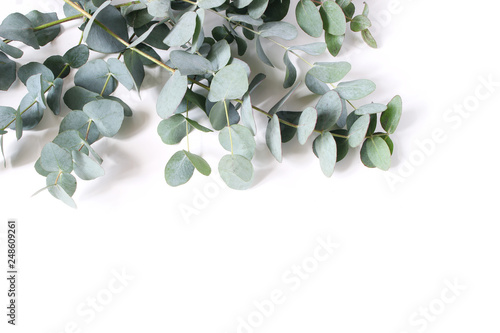 Fotobehang Bloemen Closeup of green eucalyptus leaves and branches isolated on white table background. Modern floral composition, botanical frame, banner. Feminine styled stock image. Flat lay, top view.