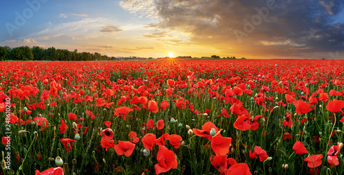 Poster de jardin Poppy Poppy field at sunset