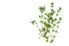 Green Thyme Bunch Isolated On White Background.