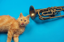 Red Kitten Playing With Golden...