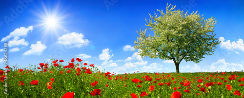 Tuinposter Blauwe hemel Blossoming lone tree on a colorful meadow with poppy flowers, with the sun shining bright in the deep blue sky