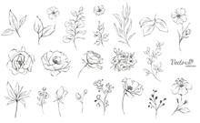 Set Of Floral Branch. Flower R...