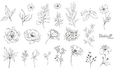 Set cvjetnih grana. Cvjetna ruža, lišće. Koncept vjenčanja s cvijećem. Cvjetni plakat, pozovite. Vektorski aranžmani za dizajn čestitki ili pozivnica