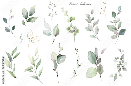 Fototapety, obrazy: Set watercolor elements -  herbs, leaf. collection, eucalyptus.  illustration isolated on white background,  leaf. Botanic