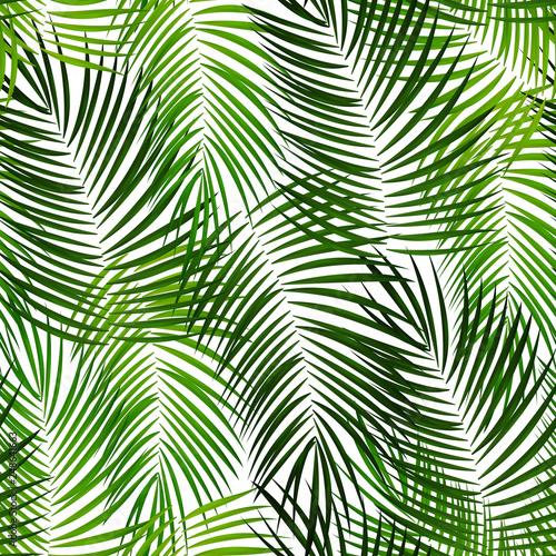 Ingelijste posters Tropische Bladeren Palm Leaf Vector Background Illustration