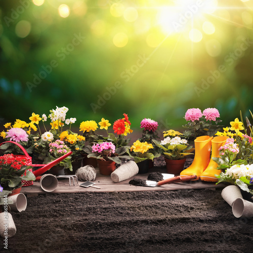 Papiers peints Jardin Garden Flowers and Plants on a Sunny Background. Gardening Concept