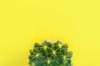 Leinwandbild Motiv Cactus close-up on yellow background with text space