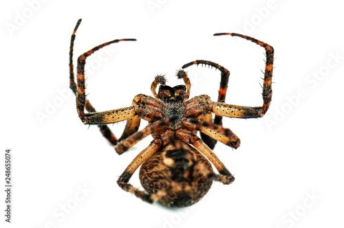 Plakat martwy pająk na białym tle