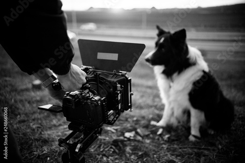 Fototapeta Dog being recorded by a filmmaker