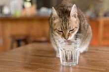 Cat Drink Water