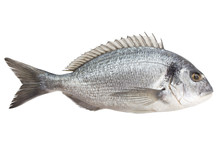 Dorado Fish, Clipping Path, Isolated On White Background, Full Depth Of Field