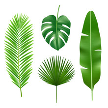 Tropical Leaves. Jungle Green Plant Nature Realistic Vector Element. Exotic Leaf Tropical From Summer Jungle Illustration