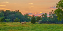 Horse In Field At Sunset, Kentucky