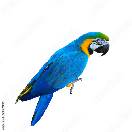 Photo Ara ararauna. Blue-yellow macaw parrot. Isolated on the white