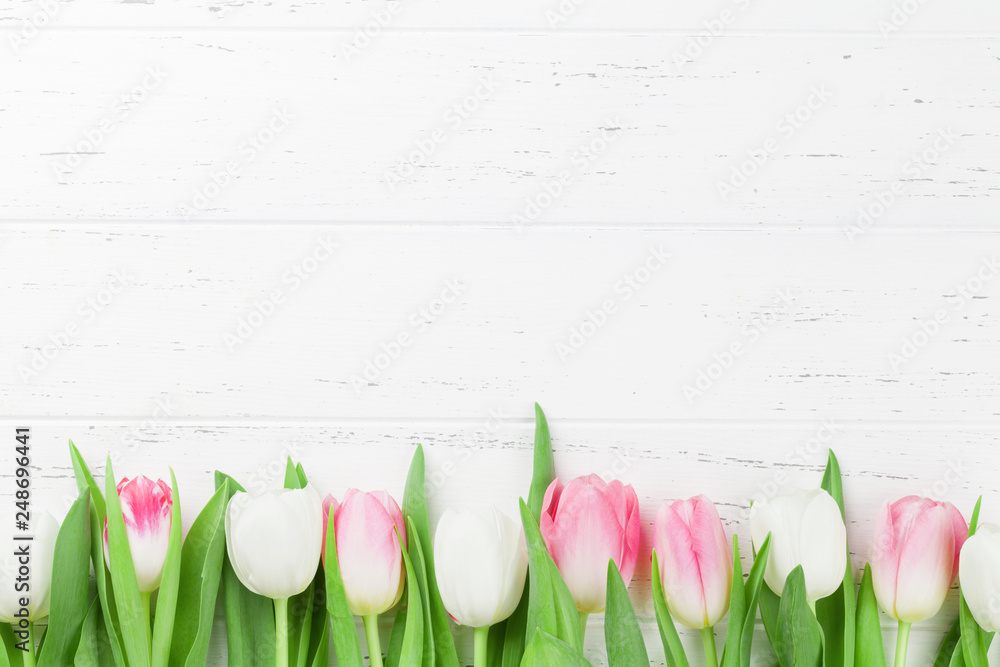 Fototapety, obrazy: Colorful tulip flowers