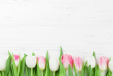 Fototapeta Tulipany - Colorful tulip flowers