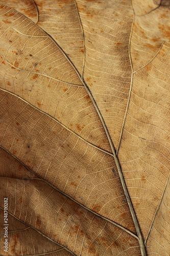 Fotografiet  Close up detail leaves texture background.