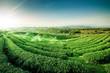 Leinwanddruck Bild - Green tea garden landscape sunset hill cultivation