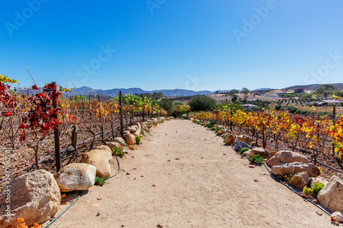 Vineyard in Valle de Guadalupe, Ensanada, Baja, Mexico on a bright sunny day Wallpaper Mural