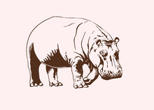Graphical Vintage  Hippo , Vector Illustration