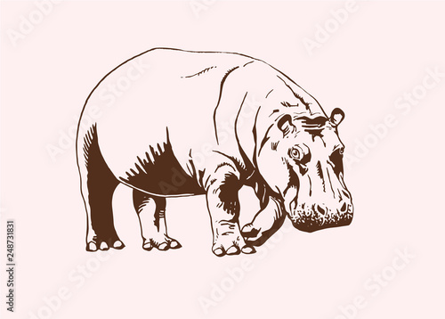 Photographie Graphical vintage  hippo , vector illustration