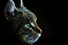 A Portrait Of A Brown Cat