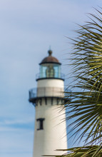 Palm With Lighthouse In Backgr...