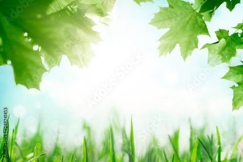 Green grass with tree leafs over sunny blue sky spring background