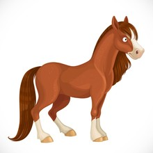 Cute Horse With A White Spot On The Face Isolated On White Background
