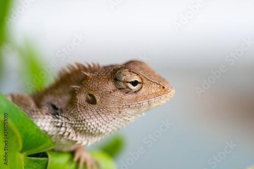 Photo  Close up lizard in nature.