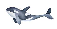 Cute Marine Orca Kid Character...