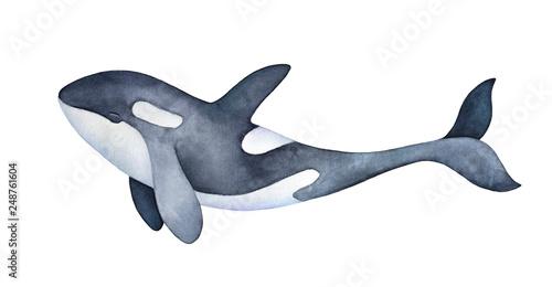 Obraz na plátně Cute marine orca kid character portrait
