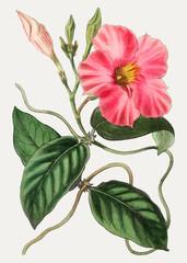 Panel Szklany Romantyczny Rocktrumpet flower