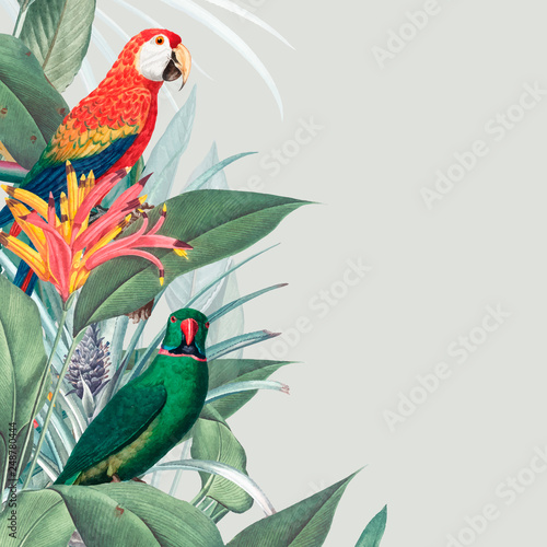 Macaw tropical mockup illustration Canvas Print