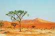 canvas print picture Namib