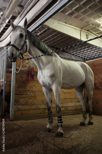 Photo  Beautiful white horse in the stable