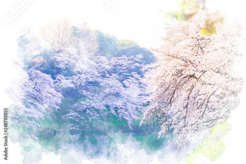 Fotografía  満開の桜 Cherry Blossoms.  Illustration of watercolor painting style.