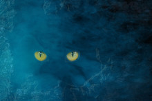Wild Yellow Eyes Of A Wild Beast Are Like Cat's Sparkling In A Dark Hollow Of A Tree Night And Fog
