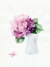 Watercolor Illustration With Pink Hydrangea Isolated On White Background. Hand Drawn Picture About Blooming Purple Flowers In Spring. Floral Painted Postcard In Watercolor Style.