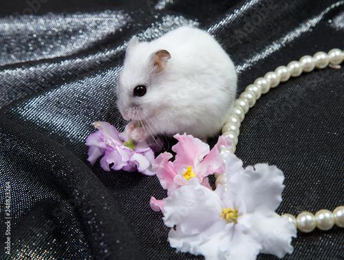 Fotodibond 3D mały biały dzungarian chomik na czarnym tle z naszyjnik i kwiaty fioletowe