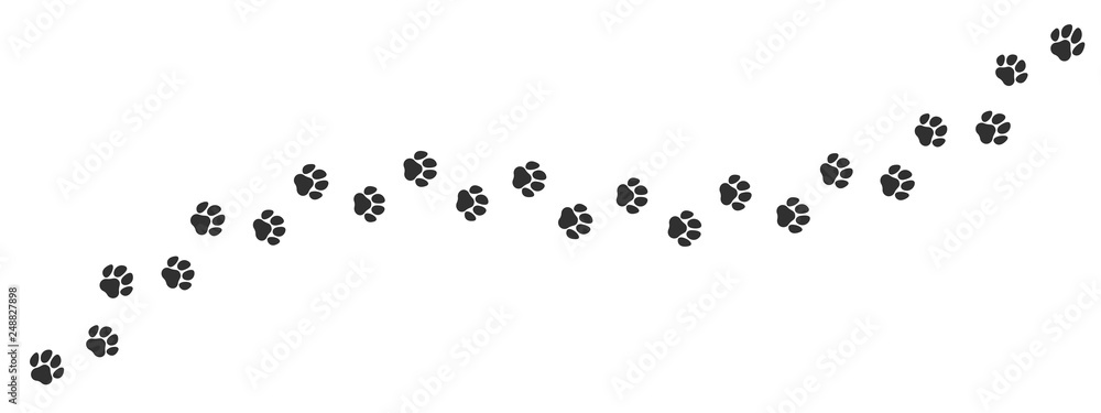 Fototapeta Paw print trail on white background. Vector cat or dog, pawprint walk line path pattern background