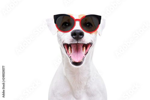 Photo  Portrait of a cheerful dog Jack Russell Terrier in sunglasses isolated on white