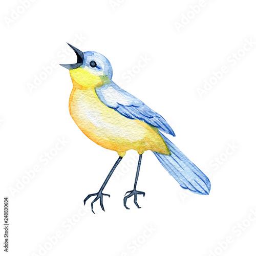 Fotografia hand-drawn watercolor songbird