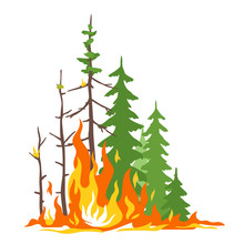 Burning Forest Spruce And Pine In Fire Flames, Nature Disaster Concept Illustration, Poster Danger, Careful With Fires In The Woods, Isolated