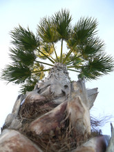 Palm Tree With Branches And Le...