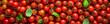 canvas print picture - Cherry Tomaten hintergrund panoramma