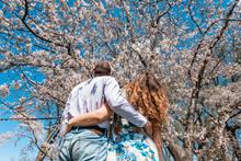 Looking Up Low Angle View On Back Of Young Couple Hugging Embracing Looking Up At Cherry Blossom Sakura Tree Flowers In Sunny Spring Blue Sky