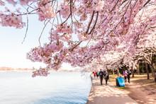 Washington DC, USA Tourists Pe...