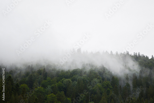 Papiers peints Forets A fog over a pine forest