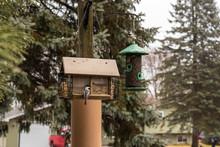 Chickadee's Sitting On A Bird House